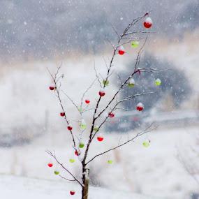 by Elizabeth Kuhn Nelson - Public Holidays Christmas