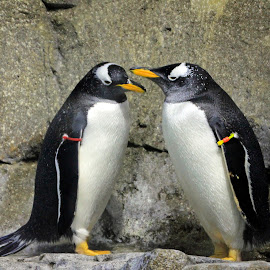 Happy Couple by Jackie Eatinger - Animals Sea Creatures (  )