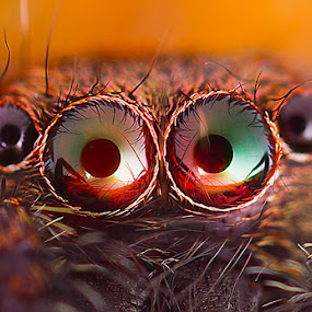 oOOo by ธเนศ ขวยไพบูลย์ - Animals Insects & Spiders