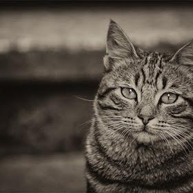 cattt.jpg