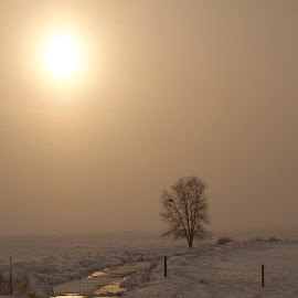 Montana Winter Praire by Drake Reed - Landscapes Prairies, Meadows & Fields
