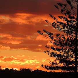 Kingscliff Sunset by Di Mc - Novices Only Landscapes ( orange, sky, tree, sunset, silhouettes, burn, glow, sun )