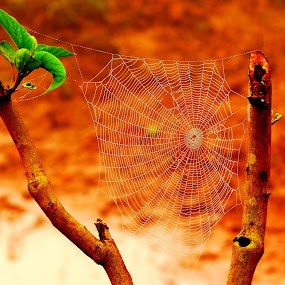by Nani Garu - Nature Up Close Webs
