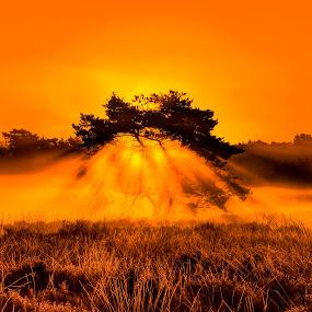 Burning Bush by Teus Renes - Landscapes Sunsets & Sunrises ( tree, fog, sunrays, sunrise, sun )