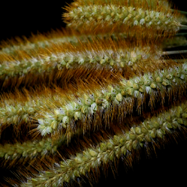 by Kris Pate - Nature Up Close Other plants