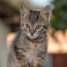 Keanu by Mircea Mihai - Animals - Cats Kittens ( #constanta, #fotograf, #mirceamihai, #animals, #animal, #cute, #babycat, #meow, #cat, #adorable, #kitten, #catursday )