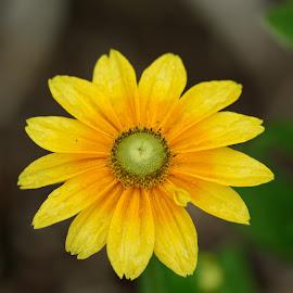by Aaron Ytterberg - Flowers Single Flower
