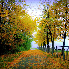 Осень в тумане by Эдуард Петруша - Landscapes Travel ( ограждение, улица, парк, липы, утро, город, листья, осень, деревья, асфальт, туман )