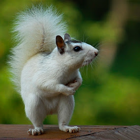 Take a Bow by Mark Turnau - Animals Other Mammals