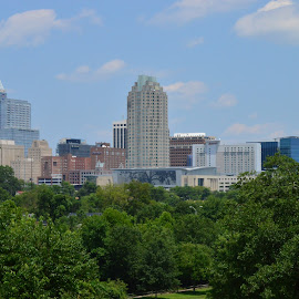 View from the Park by Thomas Shaw - City,  Street & Park  Skylines ( clouds, building, skyline, park, skyscrapers, grass, green, white, downtown raleigh, cityscape, raleigh, north carolina, city, sky, tree, skyscraper, blue, buildings, trees, view, downtown )