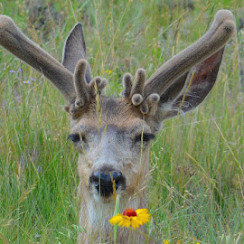 Spring Beauty by Lyn Daniels - Animals Other Mammals