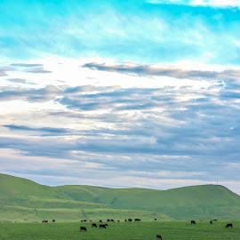 Rustic by Gert Rosslee - Landscapes Mountains & Hills ( farm, pasture, sky, blue, green, cattle )