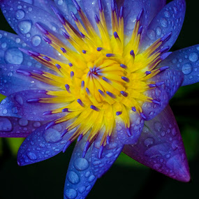 Water Lily by 3rd eye Monster - Nature Up Close Flowers - 2011-2013