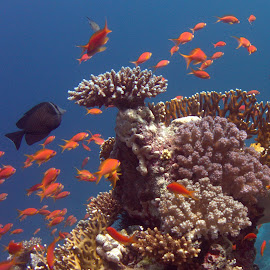 Coral reef by Pete Stewart - Nature Up Close Water