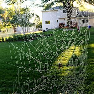 640 Likes        Spider.JPG