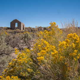The Old and the New by Mike Lee - Buildings & Architecture Decaying & Abandoned ( flowers, yellow, deserted, sage brush, decay, abandoned, desert, ruin, building, structure, stone )