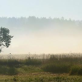 Tree at sunrise by Oleksii Liebiediev - Landscapes Prairies, Meadows & Fields ( wheat, field, dawn, fog, autumn, hay, sunlight, mist )
