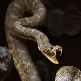 by Sandra Cannon - Animals Reptiles