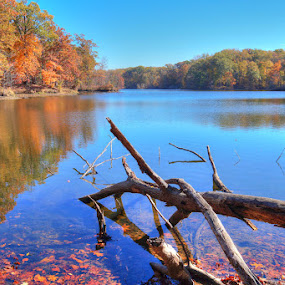 Poplar Lake at Meeman Shelby State Forest TN by Joe Machuta - Landscapes Waterscapes