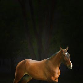 eq by Che Vienes - Animals Horses ( horseback, stallion, horses, equine )