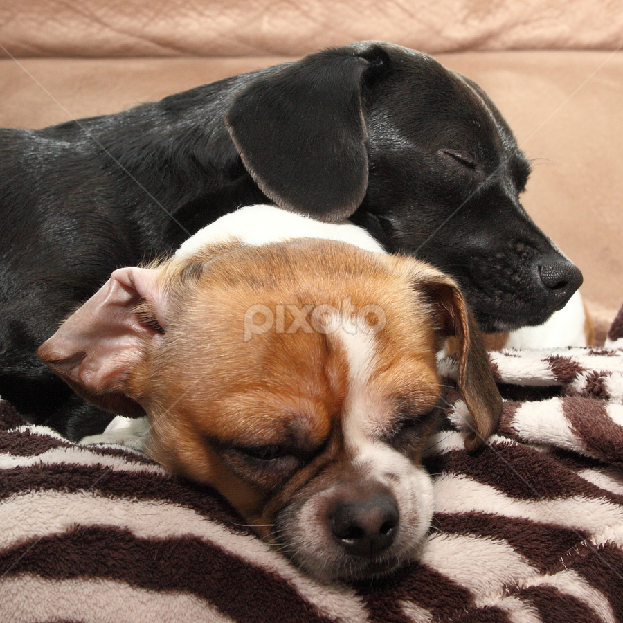 Partners In Rest by Brian Robinson - Animals - Dogs Puppies