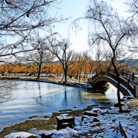 City Park In Winter by Steven De Siow - City,  Street & Park  City Parks ( landscape photography, city park, winter, lake, landscape,  )