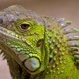 by Claudia Lothering - Animals Reptiles
