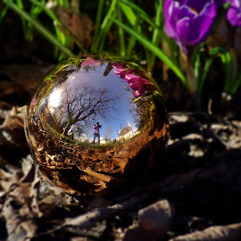 Globe from Christmas, selfie from spring by Ciprian Apetrei - Public Holidays Christmas ( reflection, decoration, christmas, brittany, globe )