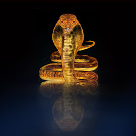 alone in the night by Capucino Julio - Illustration Animals ( snake, reflection, night, alone, animal, cobra )