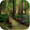 SN Nature Live Wallpapers APK for Bluestacks