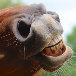 Say Cheese :) by Ann Bjerring Ravn Weis - Animals Horses