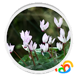 Real Flowers Live Wallpaper 1.0.b45008 Apk