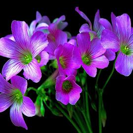 Purple by Asif Bora - Flowers Flowers in the Wild