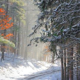 by Liz Okon - Landscapes Forests
