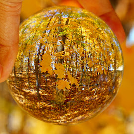 by Dipali S - Artistic Objects Other Objects ( ball, autumn, fall, glass, leaves )