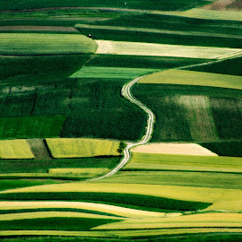 Patchwork by Nives Borčić Novak - Landscapes Prairies, Meadows & Fields ( field, patchwork, green, kalnik, landscape )
