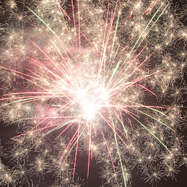 Fireworks by Trevor Smart - Abstract Fire & Fireworks ( bellamack, nt, fireworks, night sky )