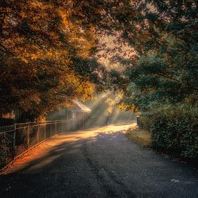 Saltwell Park Light by Adam Lang - City,  Street & Park  City Parks ( park, saltwell park, trees, gateshead, light,  )