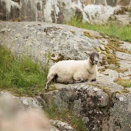 by Lori Rider - Animals Other Mammals