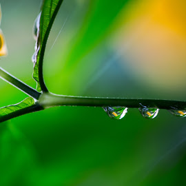 Nature's tears of joy by Andy Rigby - Nature Up Close Natural Waterdrops ( leaves, drips, dewdrops )