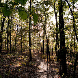 FDR 1 by Angela Hollowell - Novices Only Landscapes ( nature, autumn, state park, trees, sunshine )