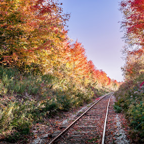 Ontario's Colorful Railway  by Frederic Rivollier - Landscapes Forests ( hespeler, fall, rail, pwcautumn, cambridge )