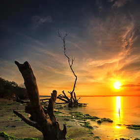 Dying by Agoes Antara - Landscapes Sunsets & Sunrises ( bali, wood, waterscape, sunset, sunrise, beach, landscape, sun )