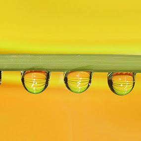 Yellow and Green by Aroon  Kalandy - Abstract Water Drops & Splashes