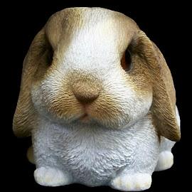 Baby Bunny 2 by RMC Rochester - Digital Art Animals ( abstract, rabbit, macro, colors, random, object, animal )