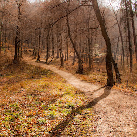 Lonely path in forest by Sebastien Brenci - Novices Only Landscapes ( orange, path, forest, leaves, light, spring )