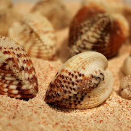 Heart Cockles In Sand by Wendy Meehan - Animals Sea Creatures ( sand, heart cockle, seashells )