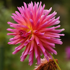 by Tim Bennett - Flowers Flowers in the Wild