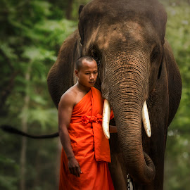 Monk with elephant in the forest . by Visoot Uthairam - People Portraits of Men ( monk, person, thailand, thai, round, travel, people, asian, religion, tree, nature, indigenous, wild, saffron, orange, animals, novice, symbol, grass, national, alms, tourism, forest, rural, mammal, country, sitting, outdoors, scene, large, culture, walking, elephant, wildlife, tranquil, buddhism, life, area, asia, ivory, men, gold, tall, male, traditional, adult, buddha, mahout, praying, ears )