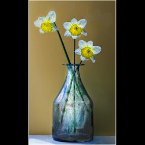 by Stephen Hooton - Flowers Flower Arangements